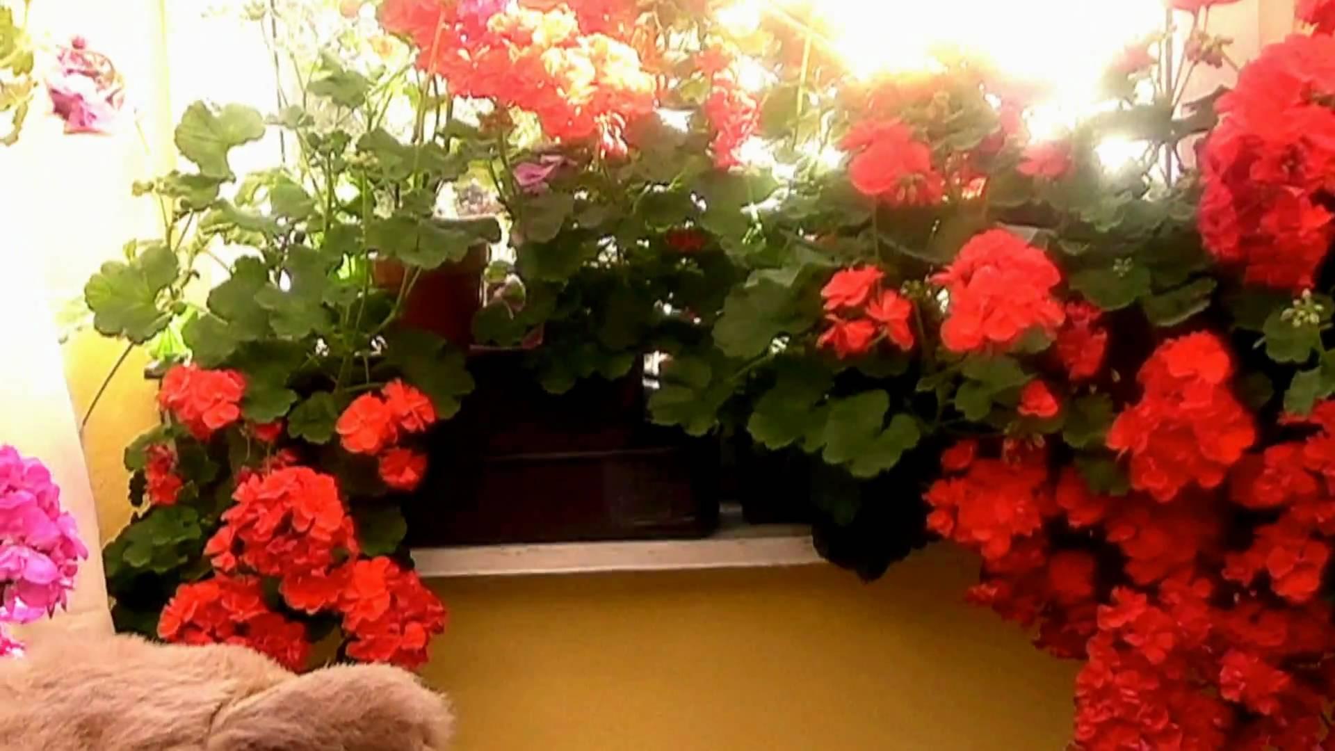ВАЖНО!Этот цветок должен быть в каждой семье!