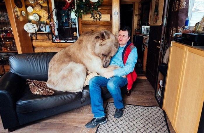 Семья приютила 3-х месячного медведя, они вместе уже 20 лет! Может ли медведь быть домашним питомцем?