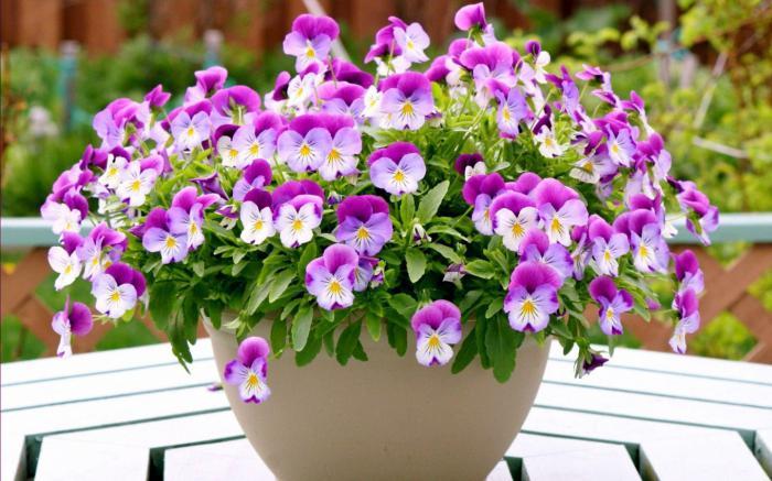С такой подкормкой ваши домашние цветы будут цвести не переставая!