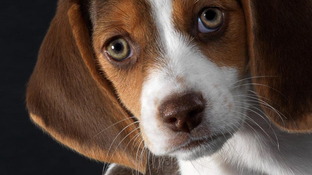 Как понять свою собаку? Зачем они лижут нам ноги и лицо, и почему так любят спать в наших постелях?