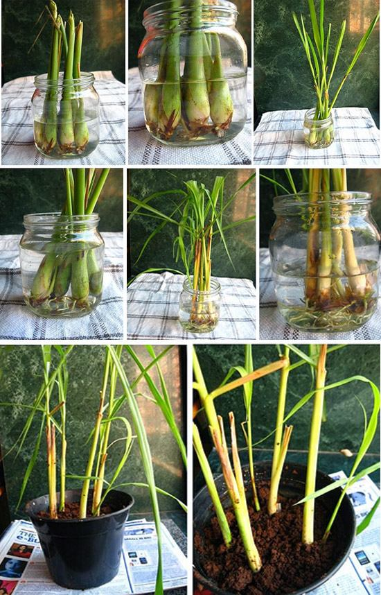 Полезные советы для начинающих садоводов. Оказалось, что мини-огород можно сделать и дома...