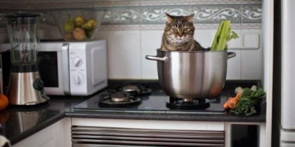 Невероятный интеллект котов!