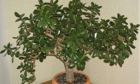Наверняка, дома у вас растет это растение: научись его использовать правильно!