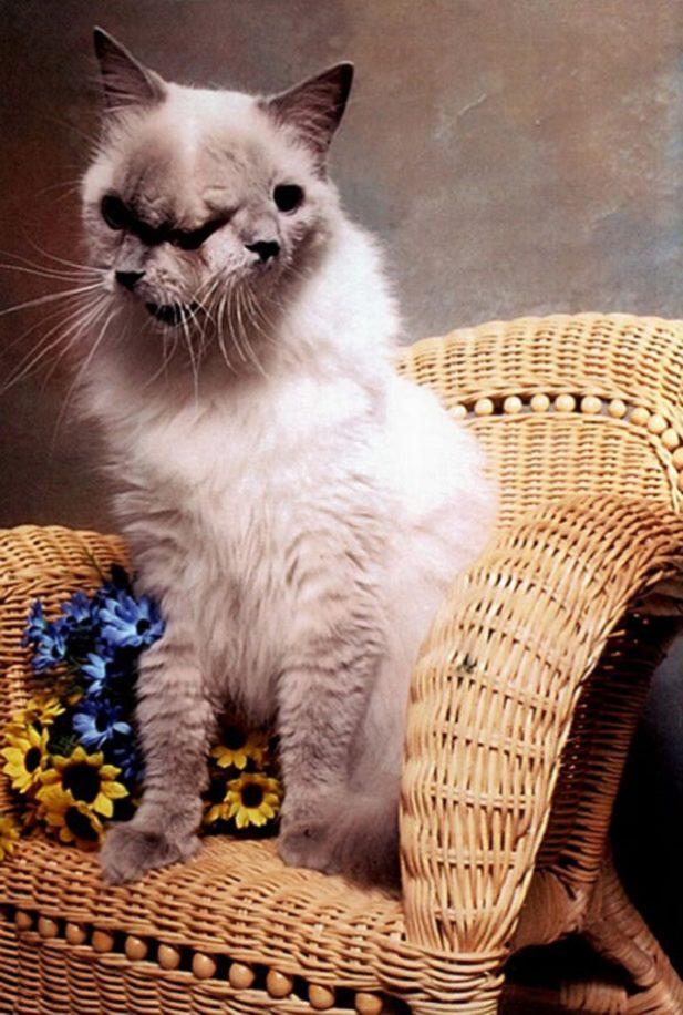 Хозяева хотели усыпить двуликого кота, но благодаря ветеринару, он отметил 12 день рождения