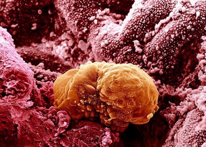 Познай себя: 23 захватывающих фото человеческих органов под микроскопом, от которых у Вас все внутри «перевернется»