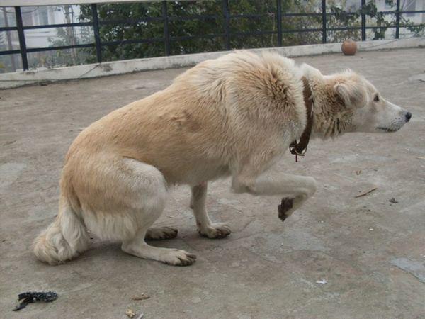 12 жестов, с помощью которых собака говорит со своим хозяином
